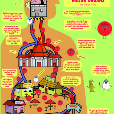 Circulatory System and Major Organs map; Illustrator. 2011