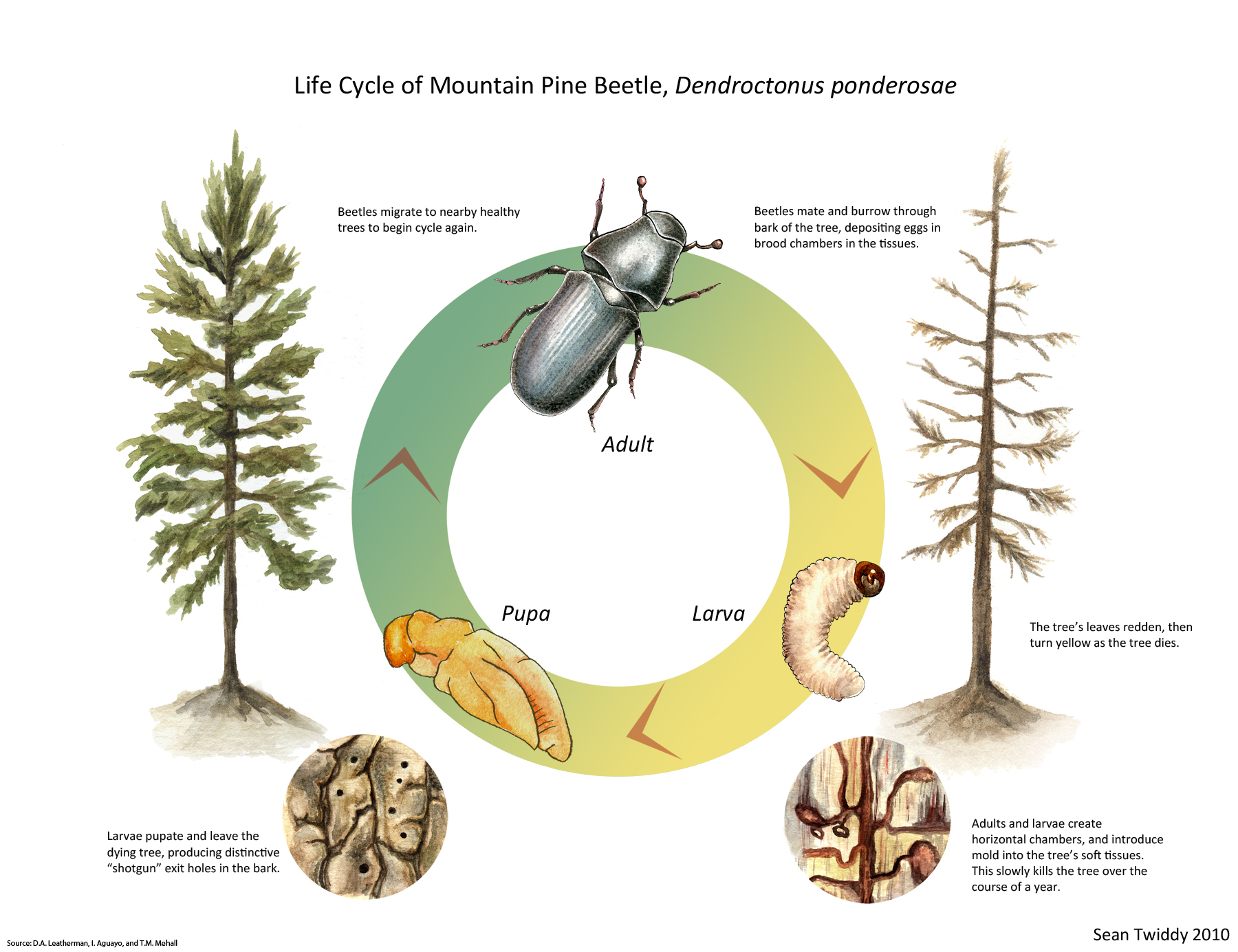 Scientific Illustration Sean Twiddy S Bughaus Productions